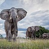 Elephants | Zambia