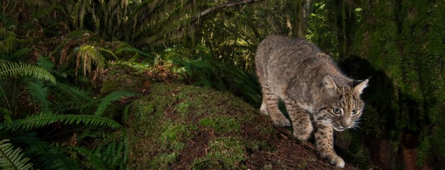 Connor Stefanison – Camera trapping in British Columbia