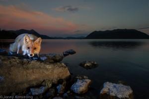 fox_lake